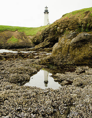 Photograph - Low Tide At Yaquina Head by Nick Boren