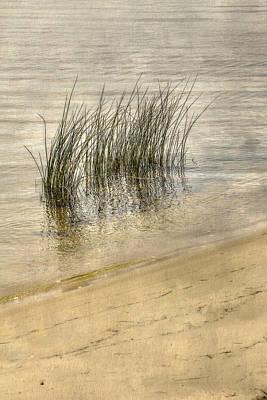 Low Tide Grass Art Print by Randy Steele