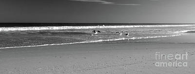 Photograph - Low Tide Gulls Bw by Mary Haber