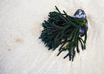 Photograph - Low Tide by Odille Esmonde-Morgan