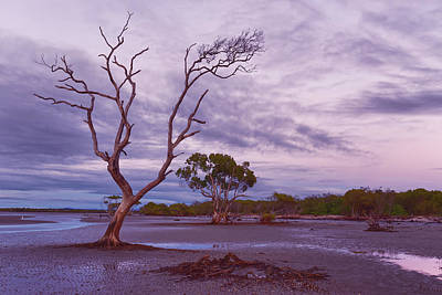 Photograph - Low Tide by Robert Charity