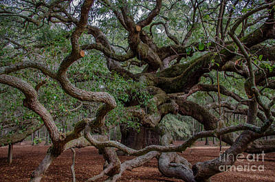 Photograph - Lowcountry Angel Oak Tree by Dale Powell