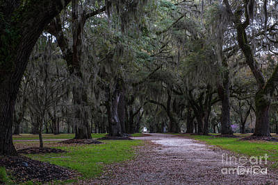 Photograph - Lowcountry Dirt Road Destination by Dale Powell