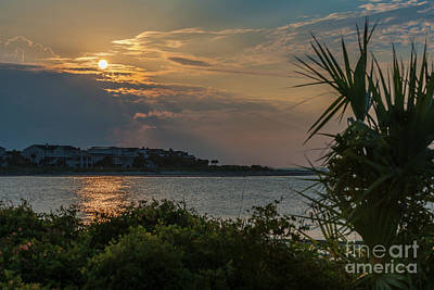 Photograph - Lowcountry Gold by Dale Powell