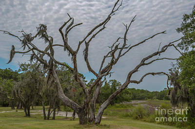 Photograph - Lowcountry Spooky Halloween Tree by Dale Powell