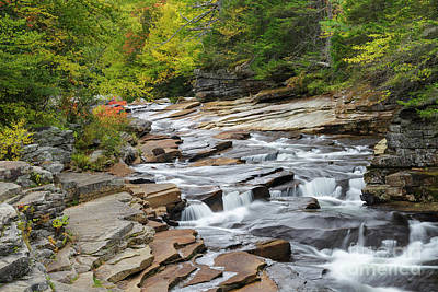 Photograph - Lower Ammonoosuc Falls - Carroll, New Hampshire by Erin Paul Donovan