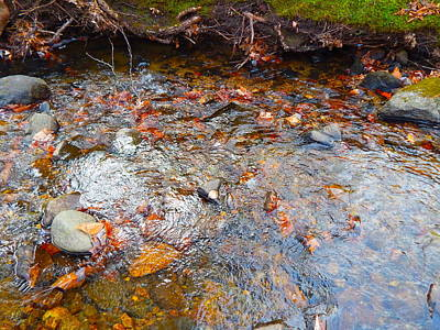 Photograph - Lower Childs Brook 46 by George Ramos