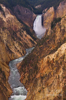 Photograph - Lower Falls Of The Grand Canyon Of The Yellowstone by Katie LaSalle-Lowery