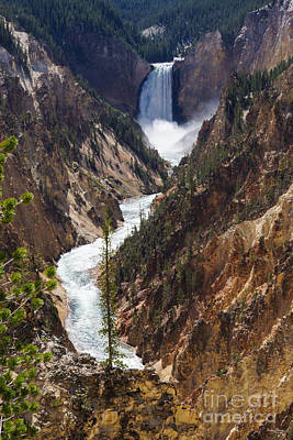 Photograph - Lower Falls Yellowstone by Jennifer White