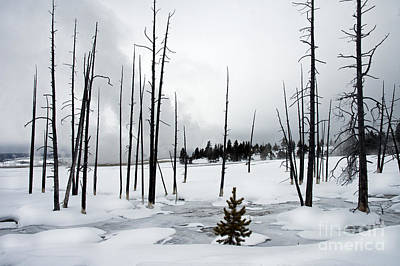 Photograph - Lower Geyser Basin Area by Cindy Murphy - NightVisions
