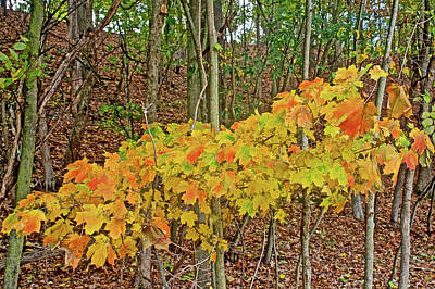 Photograph - Lower Level Multi-colored Maple Leaves On Trail To North Beach Park In Ottawa County, Michigan  by Ruth Hager