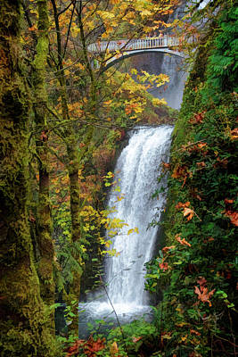 Photograph - Lower Multnomah Falls by Wes and Dotty Weber