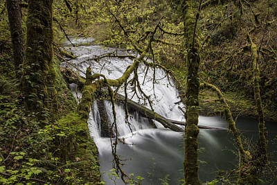 Photograph - Lower North Falls Silver Falls State Park by John McGraw