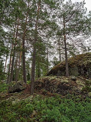 Photograph - Lower Ritajarvi Forest Hdr by Jouko Lehto