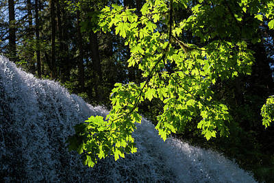 Photograph - Lower South Falls Leaves by Robert Potts