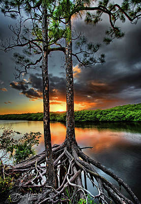 Photograph - Loxachatchee Sunset by David A Lane