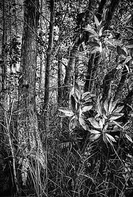 Photograph - Loxahatchee Refuge 6621bw by Rudy Umans