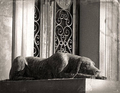 Photograph - Loyal Companion by Brenda Conrad