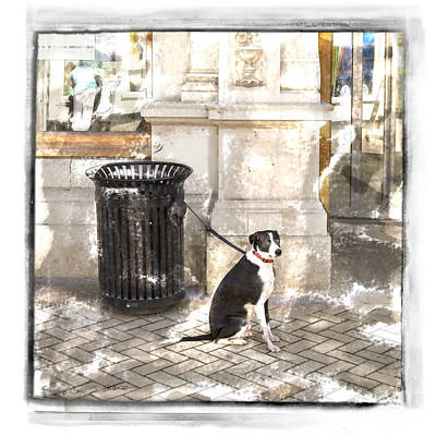 Photograph - Loyal Dog by Craig J Satterlee