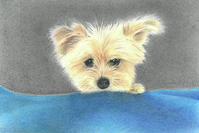 Drawing - Loyal Friend by Troy Levesque