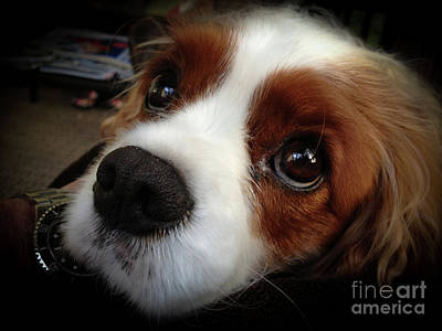 Photograph - Loyal Pup And Sweet Face by Dale Powell
