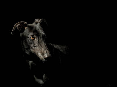 Mans Best Friend Photograph - Loyality by Paul Neville