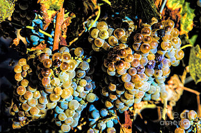 Photograph - Lucious Grapes by Rick Bragan