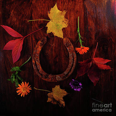 Photograph - Lucky Colors by Randi Grace Nilsberg
