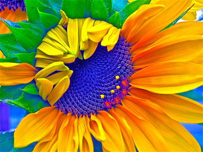 Sunflower Digital Art - Lucky by Gwyn Newcombe