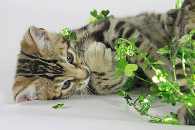 Lucky Kitten Art Print by Shoal Hollingsworth