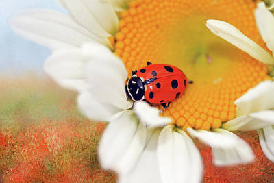 Ladybug Photograph - Lucky Lady by Donna Kennedy