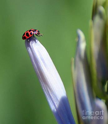 Photograph - Lucky Ladybug by Cindy Manero