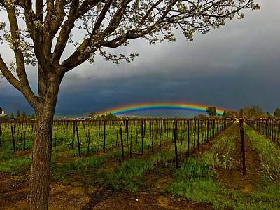 Photograph - Lucky Rainbow In Napa Valley by Cadence Spalding
