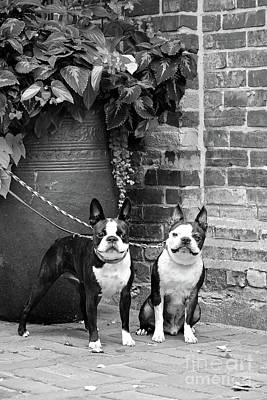 Photograph - Lucy And Cisco by Susan Herber