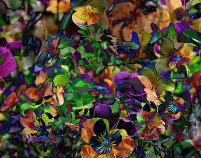 Photograph - Lucy In Sky Pansies by Paula St James