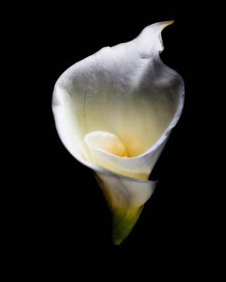Luminous Calla Lily Art Print