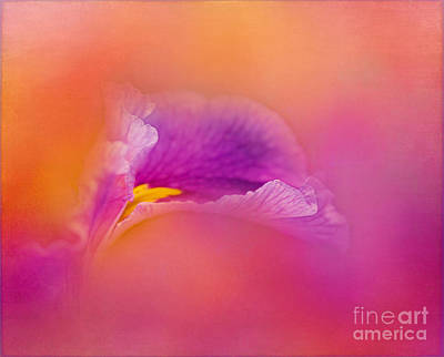 Photograph - Luminous by Judi Bagwell