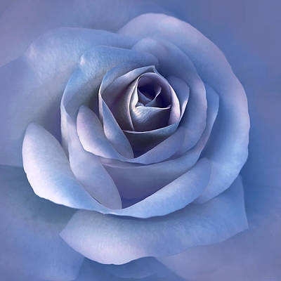 Photograph - Luminous Lavender Rose Flower by Jennie Marie Schell