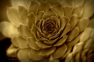Photograph - Luminous Succulent by Jeanette C Landstrom