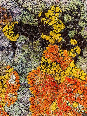 Photograph - Lumpy Lichen by Jean Noren