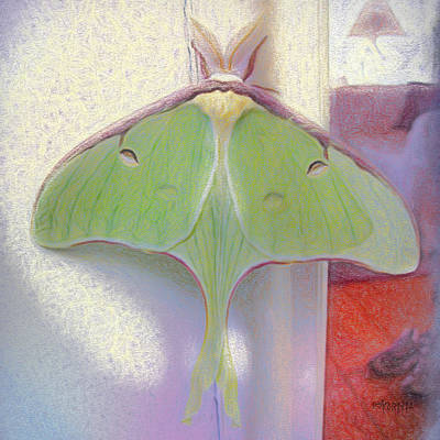 Photograph - Luna Moth Came To Visit by Rebecca Korpita