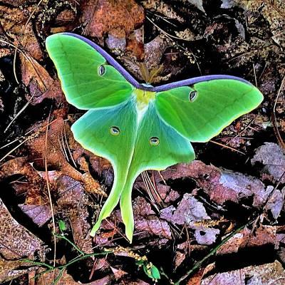 Photograph - Luna Moth by Gary Edward Jennings