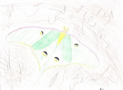 Luna Moth Drawing - Luna Moth On Tree by Rebecca Volke