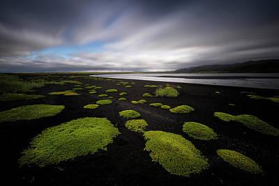 Photograph - Lunar Moss by Dominique Dubied