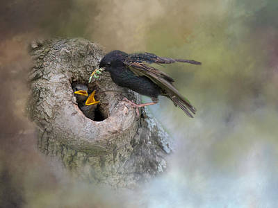 Photograph - Lunch Arrives by Robin-Lee Vieira