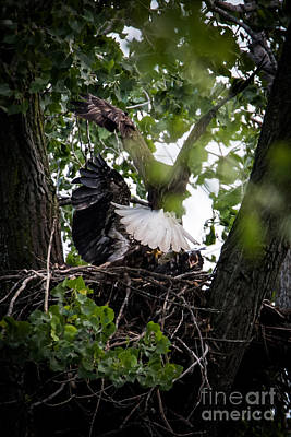 Photograph - Lunch For The Eaglets 2 by Ronald Grogan