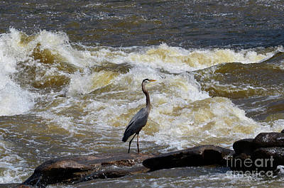 Photograph - Lunch In The James River 1 by Afroditi Katsikis