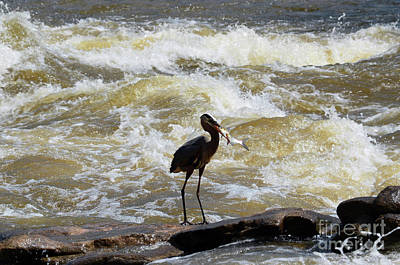 Photograph - Lunch In The James River 10 by Afroditi Katsikis