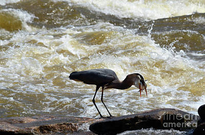 Photograph - Lunch In The James River 12 by Afroditi Katsikis