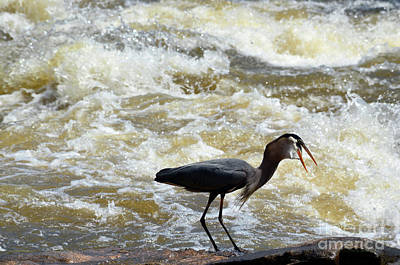 Photograph - Lunch In The James River 13 by Afroditi Katsikis